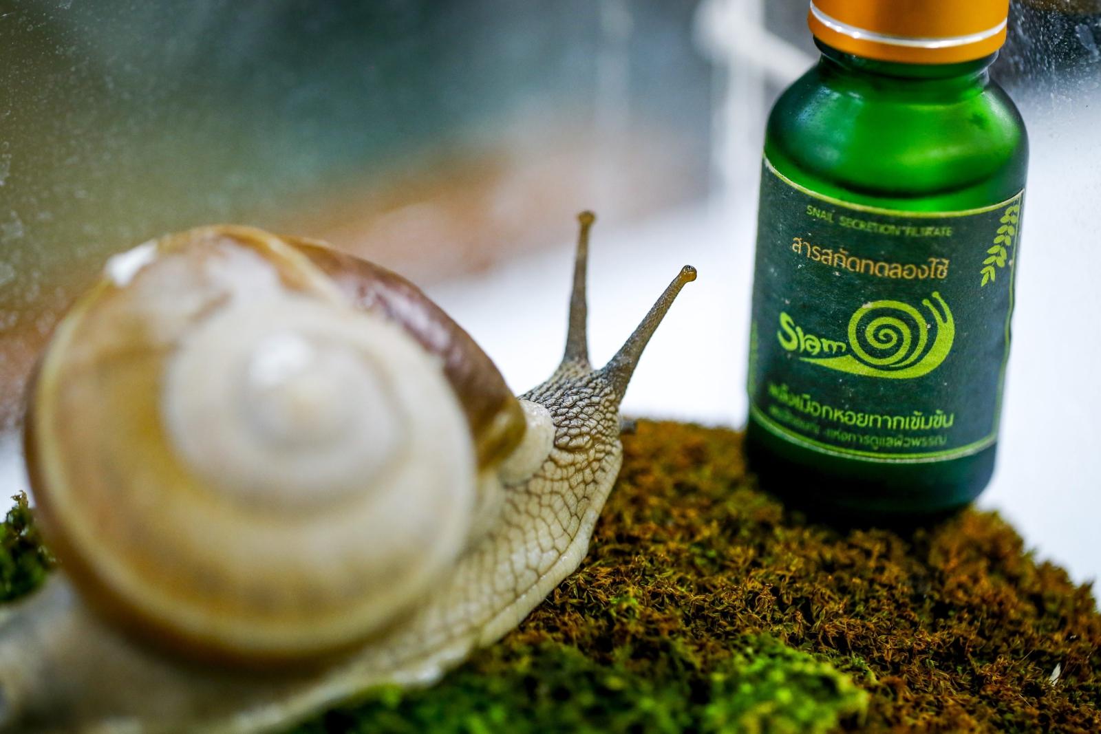 La bave d'escargot: est-ce que cela vaut la peine d'essayer?
